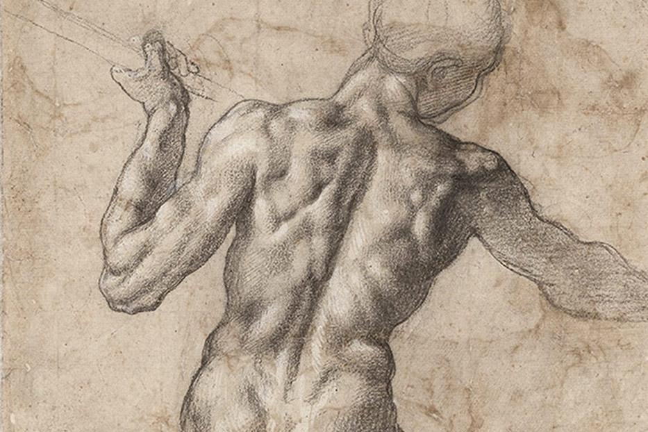 Nacken, Brust- und Lendenwirbelsäule bilden den Rücken (Bild: Wikimedia Commons)